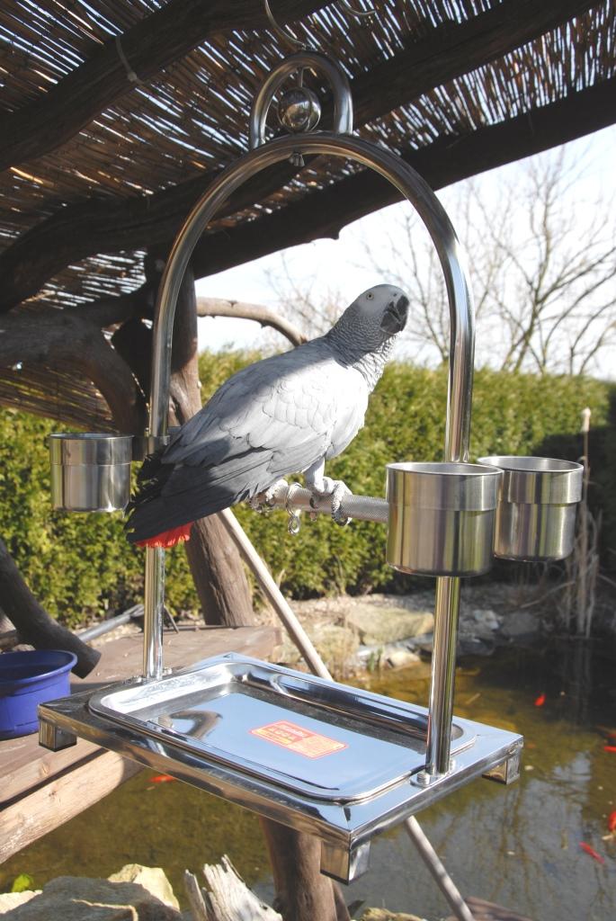parrot play stand ben